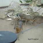 zoo_031