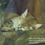 zoo_033