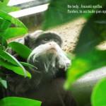 zoo_036