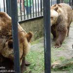 zoo_048
