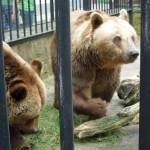 zoo_049