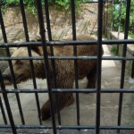 zoo_051