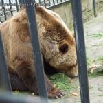 zoo_052
