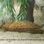 zoo_064