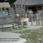 zoo_071