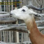 zoo_072