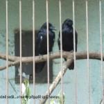zoo_075