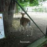 zoo_076