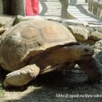 zoo_109