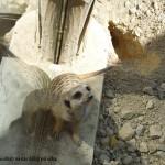 zoo_117