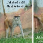 zoo_119
