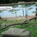 zoo_121