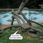 zoo_121a