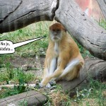zoo_121b