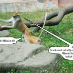 zoo_122