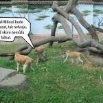 zoo_123