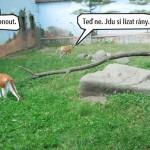 zoo_124