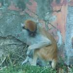zoo_125