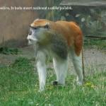 zoo_126
