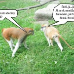 zoo_130