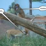 zoo_133