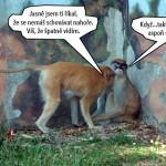 zoo_134