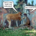 zoo_135