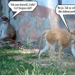 zoo_136
