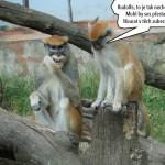 zoo_140
