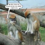 zoo_141