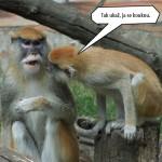 zoo_143