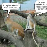 zoo_144