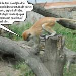 zoo_145