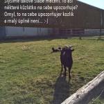45_alfy_jaro_14